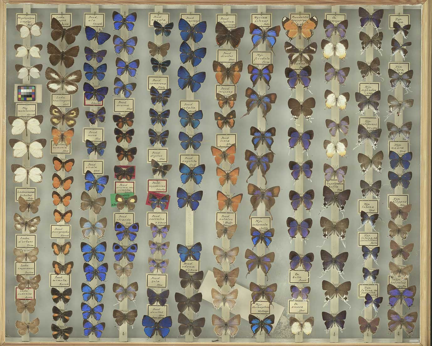 SatScan: butterflies drawer
