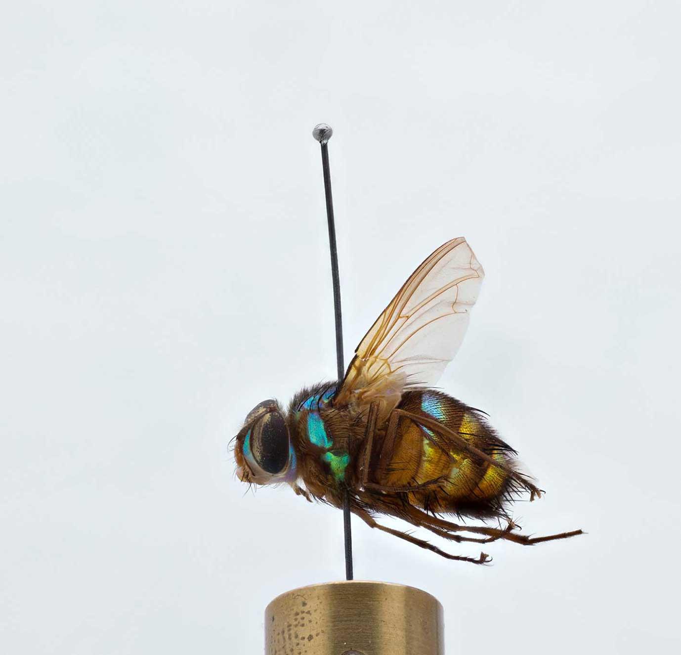 Zoosphere: fly
