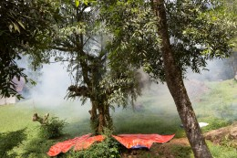 Sampling methods: Canopy fogging